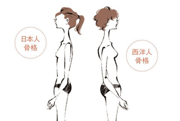 日本人と西洋人骨格比較